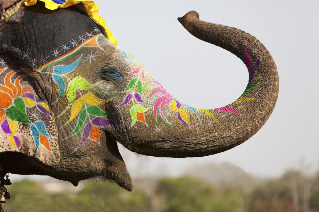 Elefántjogitörvények Sri Lankán